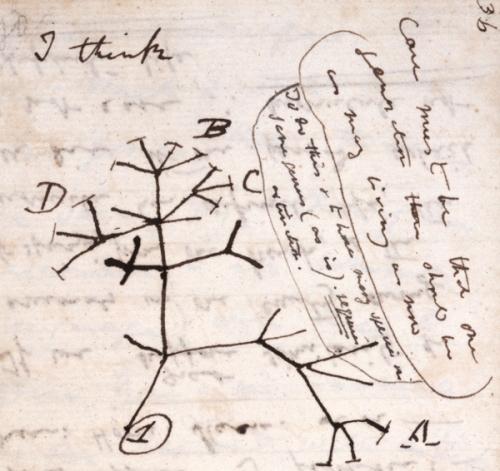 tree-of-life-i-think