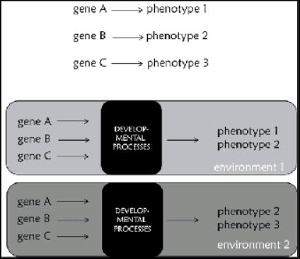 genedevelop1